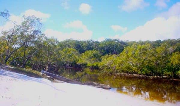 Urang Creek, Fraser Island, looking upstream at high tide