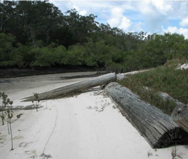 Urang Creek, Fraser Island, looking downstream at low tide